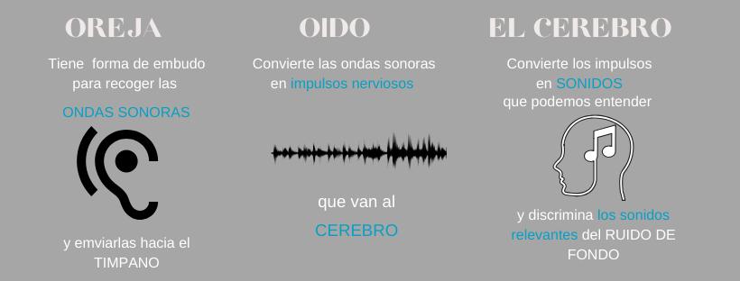 funcionamiento oído